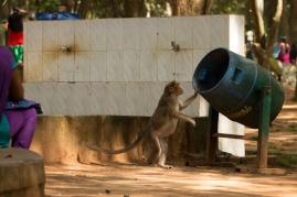 Monkey foraging