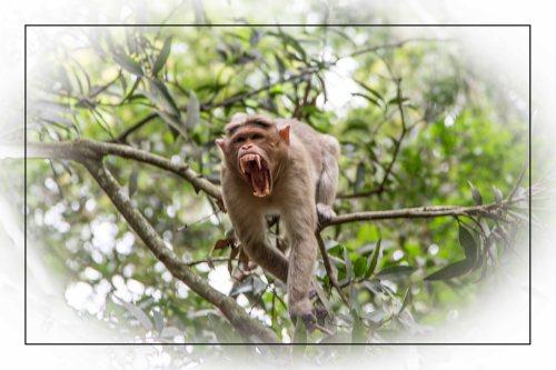 monkey teeth