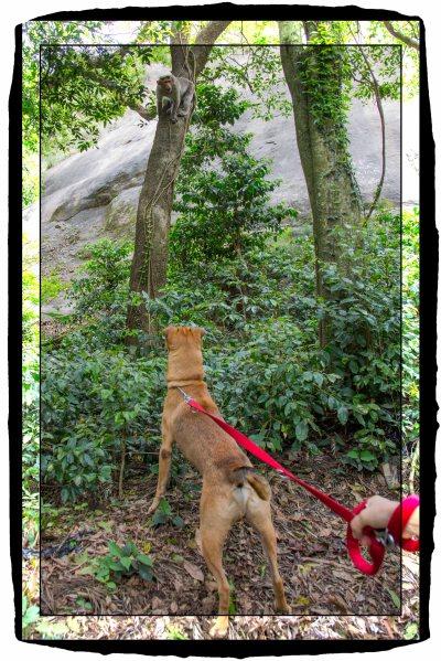 Dog and monkey