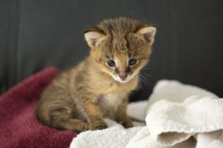 kitten (1 of 1)-2