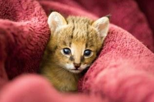 kitten (1 of 1)-3